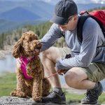 Tips for Peak Pet Fitness