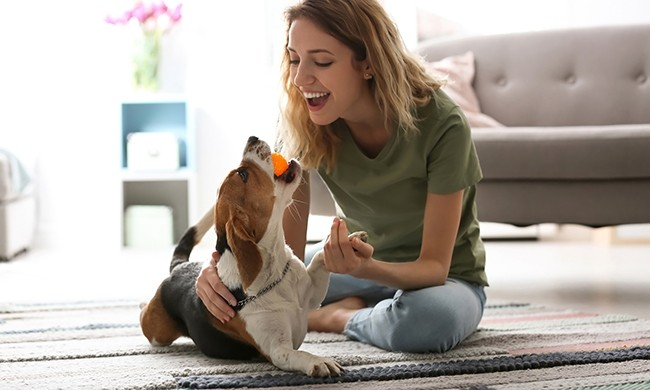 5 Ways to Prepare for a New Furry Companion