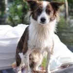 Emergency Preparedness Tips to Help Ensure Pet Safety