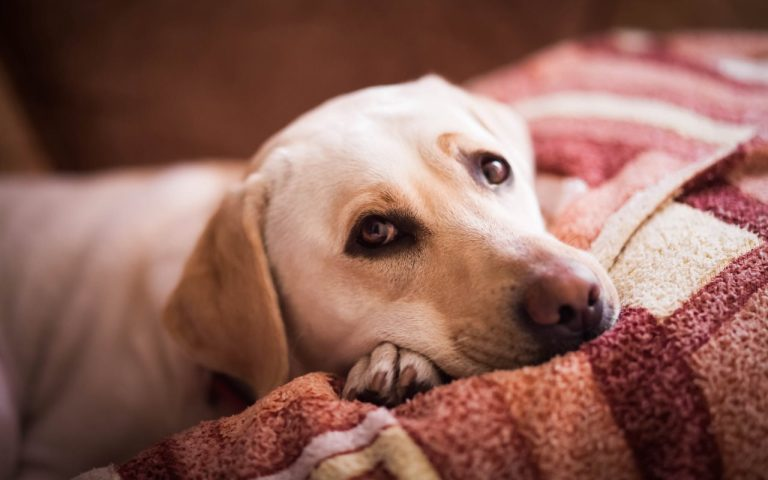 Discomfort to watch for in your dog