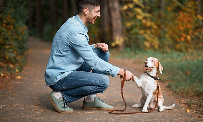 Tips to Train Your Pet