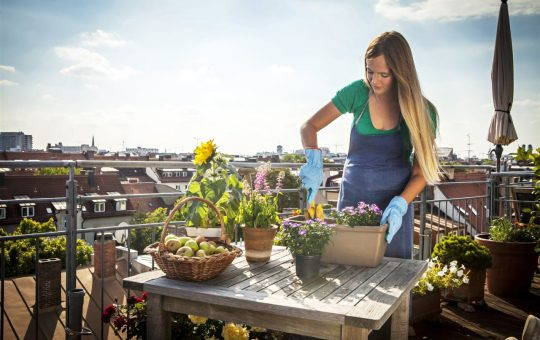 """Dig into gardening trends: Tips to get started Just like fashion, trends in gardening come and go … and sometimes come back again. Some shifts in gardening were inspired by necessity, like the """"victory gardens"""" of WWII for growing food during years of rationing. Others reflected societal changes, like the green lawns of the 1950s and 1960s, when families spent more time playing and entertaining in their yards than ever before."""
