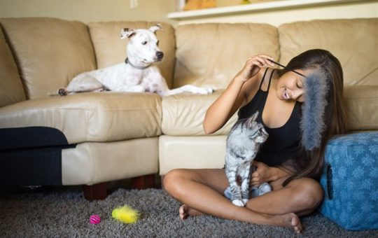 Fun enrichment activities for you and your pet