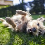 Ways to help keep your dog protected and happy this summer