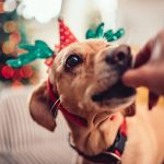 Include Your Furry Friends in Holiday Festivities