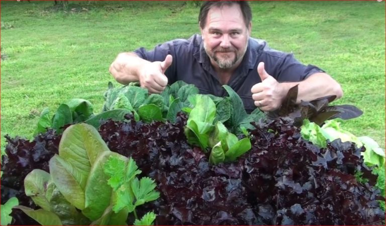 Vegetables You Should ALWAYS Grow