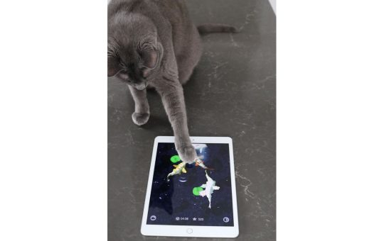 5 fun ways to entertain your cat