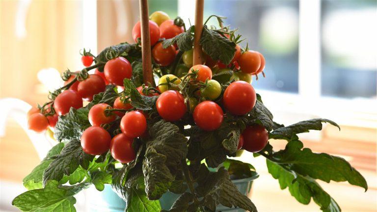4 easy ideas to enhance your garden