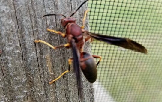 What To Do When Wasps Get Too Close For Comfort
