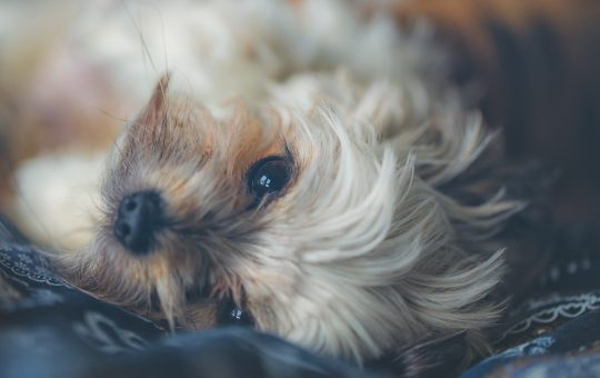 How to Relax My Dog: 15 Hours of Music to INSTANTLY Calm Your Dog! - Keep your pooch calm, relaxed and entertained for hours with our soothing music for puppies.