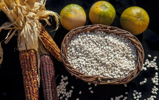 Historians know that turkey and corn were part of the first Thanksgiving, when Wampanoag peoples shared a harvest meal with the pilgrims of Plymouth plantation in Massachusetts.