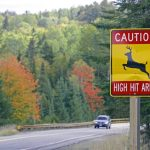 Fall means more deer on the road: 4 ways time of day, month and year raise your risk ofcrashes