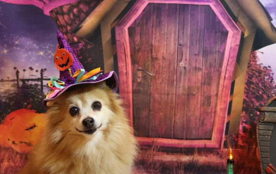 Celebrate Halloween with Your Pet
